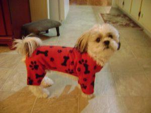 Dog Apparel by Cindy Shepherd